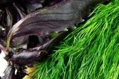 Вкусные рецепты: Скумбрия соленая, Салат Колесо, Печенье.
